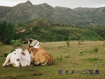 岩手県岩泉町×製造・加工/法人【34529】-1