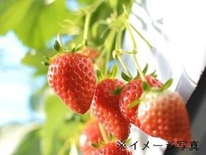 小野澤いちご園-top