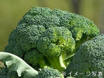 茨城県筑西市×野菜/法人【34595】-2