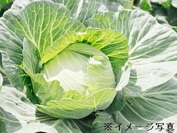 茨城県筑西市×野菜/法人【34595】-top