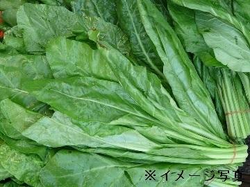 茨城県筑西市×野菜/法人【34595】-1