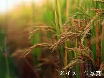 愛知県豊田市×稲作・果樹・野菜/法人【34659】-top