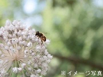 佐々木明夫-top