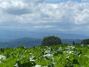 小山農園-1