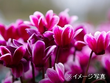 三井花園-1