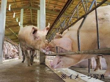 千葉県匝瑳市×養豚/法人【34722】-1