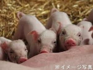 千葉県匝瑳市×養豚/法人【34722】-top