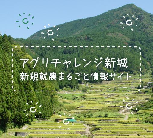 【愛知県新城市】ほうれん草農家緊急募集