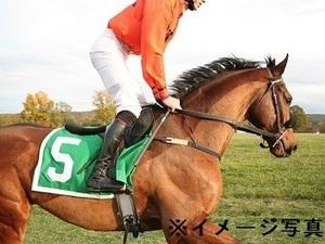 千葉県富里市×競走馬/個人【4498】-top