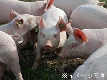 千葉県旭市×養豚・路地野菜/個人【34763】-1