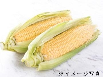 千葉県旭市×養豚・路地野菜/個人【34763】-2