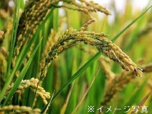 有限会社高橋農園-top