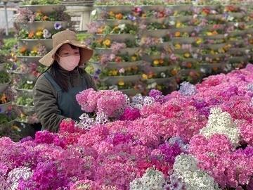 農事組合法人花の生産舎組合-4