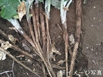 茨城県鉾田市×野菜/個人【34785】-top