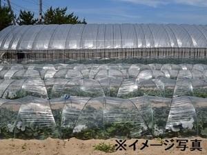 静岡県浜松市×野菜/法人【34795】-1