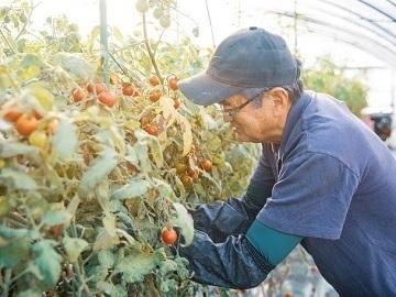 北海道士別市×野菜/法人【34800】-3