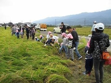 福岡県久留米市×稲作・野菜/法人【34829】-2