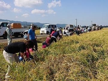福岡県久留米市×稲作・野菜/法人【34829】-4