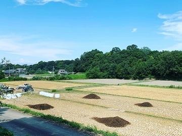 河田農園-6