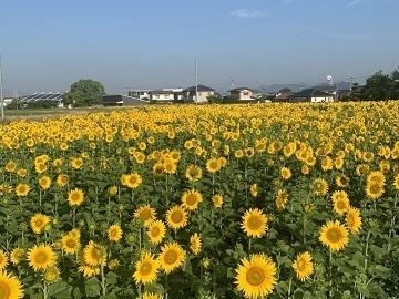河田農園-8