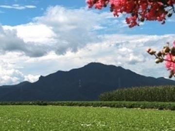 群馬県昭和村×露地野菜/個人【34837】-top