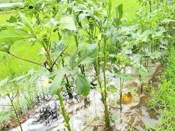 農業生産法人 株式会社サガンベジ-4