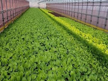 農業生産法人 株式会社サガンベジ-7
