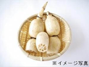 佐賀県白石町×露地野菜/法人【34848】-top
