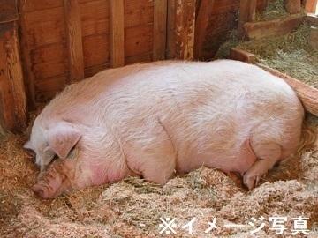 栃木県日光市×養豚/法人【34852】-top