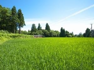 福岡県上毛町×お米・野菜/法人【34868】-top