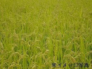 滋賀県米原市×露地野菜/法人【34869】-top