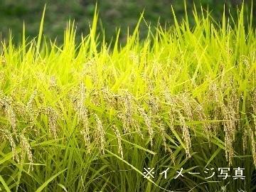 兵庫県相生市×稲作/畑作/個人【34876】-top
