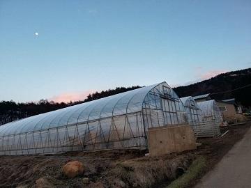 今松農園-2
