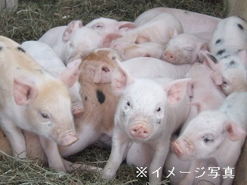 岩手県八幡平市×養豚/個人【34893】-top
