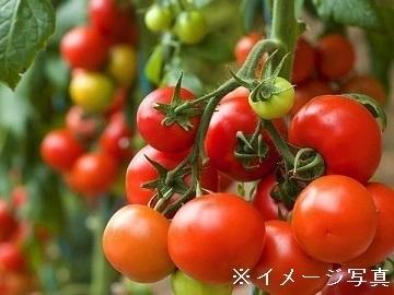 大出トマト農園-top