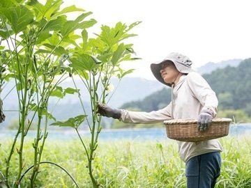 愛知県田原市・東栄町×水稲・露地野菜/法人【34905】-1