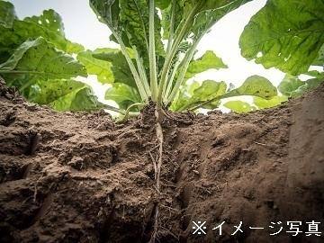 神奈川県相模原市×野菜・果樹/法人【34912】-1