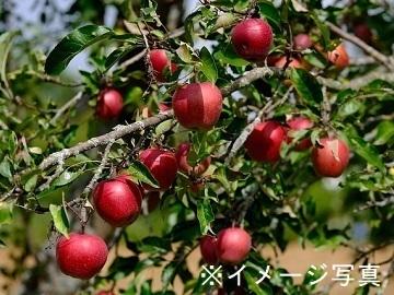 神奈川県相模原市×野菜・果樹/法人【34912】-2