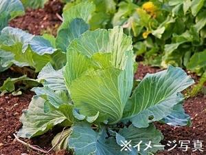 神奈川県相模原市×野菜・果樹/法人【34912】-top