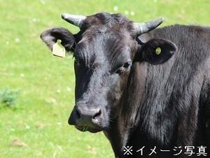 栃木県那須町×肉牛/法人【34928】-top