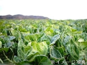 関根農園-top