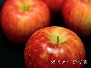 青森県北津軽郡×果樹/個人【34933】-top