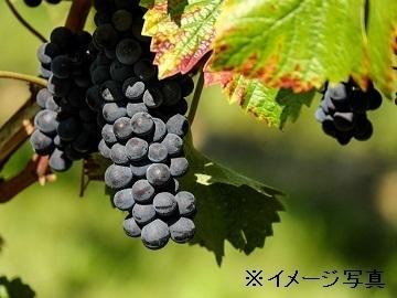 添田農園-3