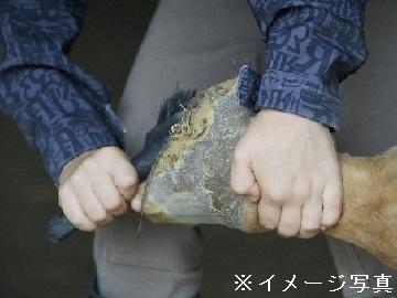 北海道北見市×削蹄/法人【34932】-top