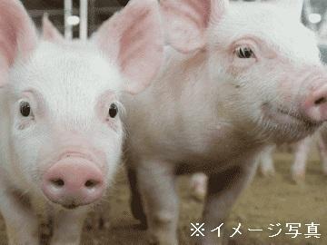 群馬県安中市×養豚/法人【34983】-top
