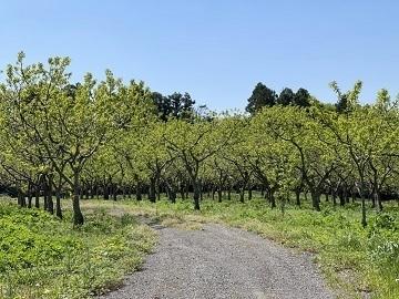 福田グリーン農園-3