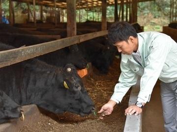 北海道浜中町・足寄町×肉牛/法人【34999】-top