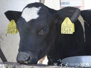 北海道紋別市×酪農/法人【34998】-1