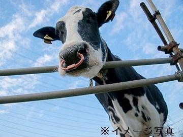 千葉県成田市×酪農/法人【35002】