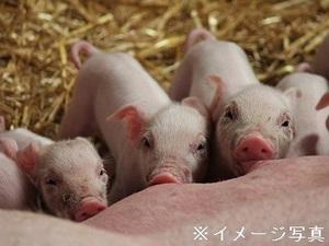 群馬県桐生市×養豚/法人【35017】-top